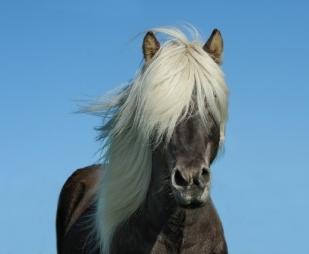 horse-1330690_1280